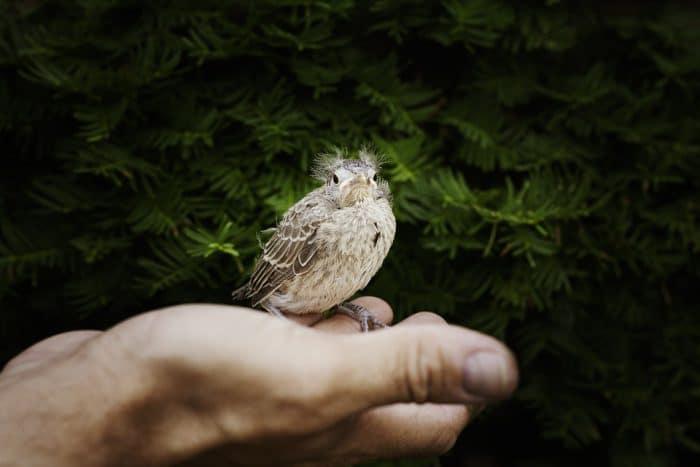 soigner un animal naturellement