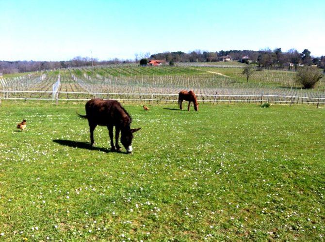 Le cheval et l